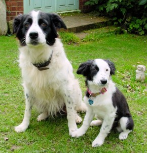 Jessie and Flossie